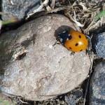 Seelenwanderung: Das nächste Mal ein Käfer?