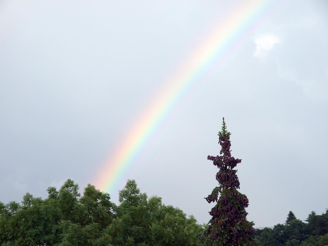 Regenbogen - subjektive Wahrnehmung eines objektiven Geschehens | Bild: Heinz Knotek/TrinosophieBlog